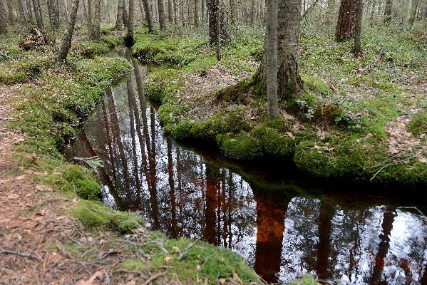 20 leiriläistä pääsee tutustumaan Teijon kansallispuiston hienouksiin kesäkuun alussa.