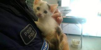 """Facebook-päivityksessä poliisi kiittää eläinsuojeluyhdistysten vapaaehtoisia, jotka löysivät tällekin """"pehmeälle mutta teräväkyntiselle asiakkaalle"""" kodin."""