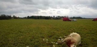 Lammaslaidun sijaitsee aivan Kiikalan kirkonkylän tuntumassa.