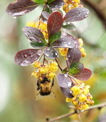 Akrobatiaa kukilla. Kuva: Markku Lindberg
