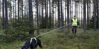Salolainen Acke Holmberg ja labradorinnoutaja Kalle ovat usein mukana etsimässä loukkaantunutta hirvieläintä.