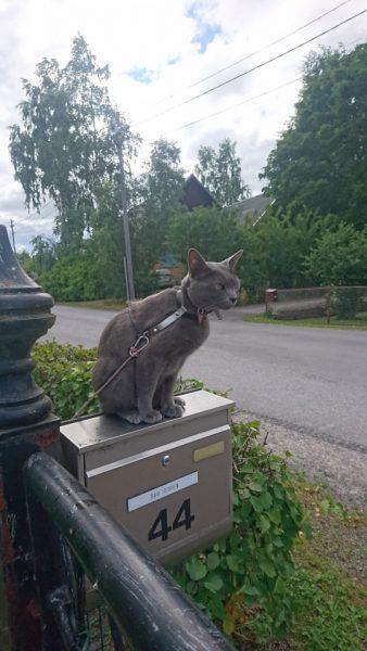 Kalle-kissa kysyy, missä posti viipyy. Kuva on Sariannen.