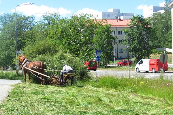 Turussa noudatetaan ilmastosopimusta. Ruohonleikkuri toimii uusiutuvalla energialla, naurahtaa Paavo Salonen. Kuva on otettu heinäkuussa Stålarminkadun varrella.